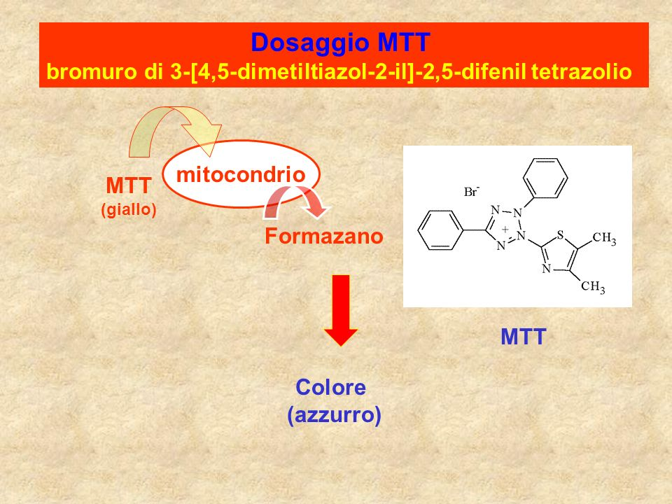 bromuro di 3-[4,5-dimetiltiazol-2-il]-2,5-difenil tetrazolio